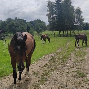 Przygoda z końmi w Polskim Języku Migowym 17-19 września Mniszków, Rudawy Janowickie